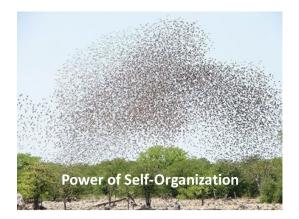 self-organization1